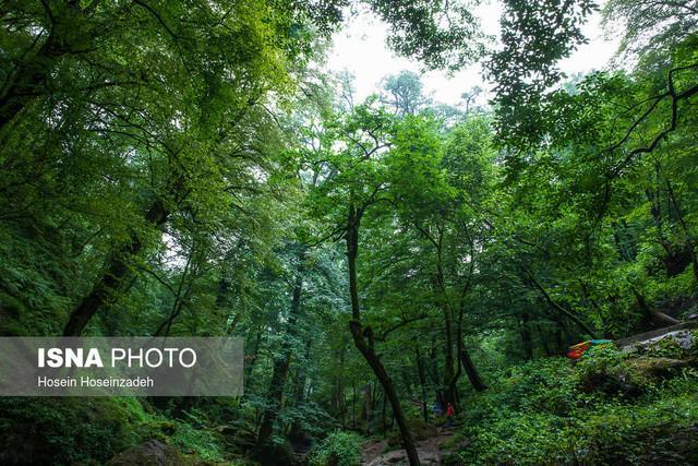 مادر جنگل های اروپا در ایران چه می نماید؟