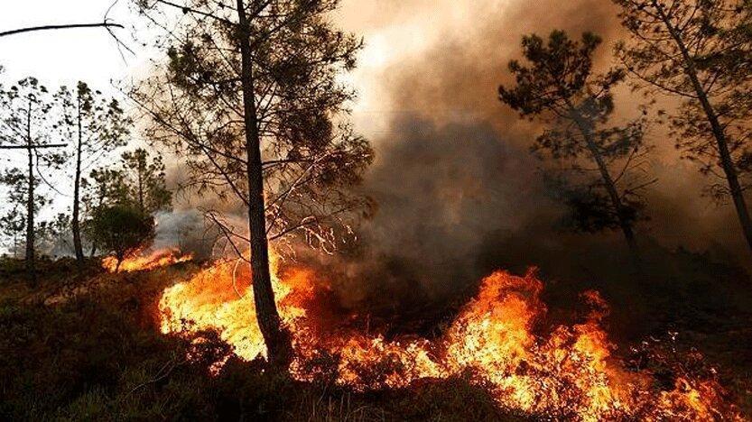 تاثیرات آتش سوزی جنگل ها بر جوانه زنی بذرها